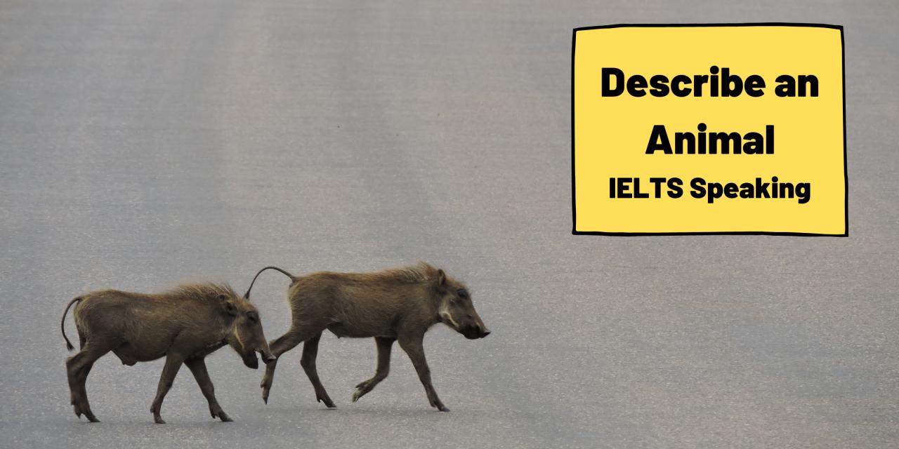Describe an Animal [IELTS Speaking]