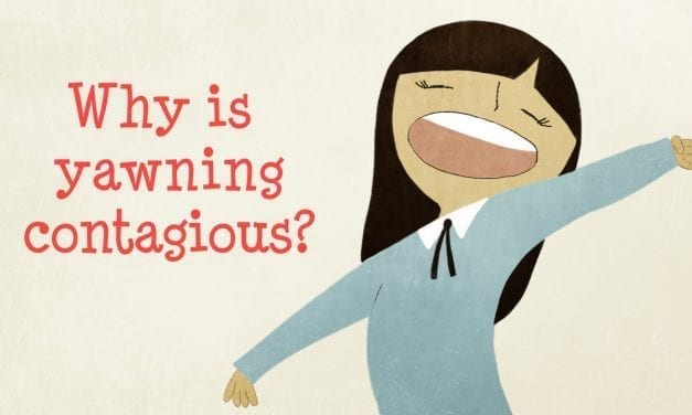 Have you ever wondered why we yawn?