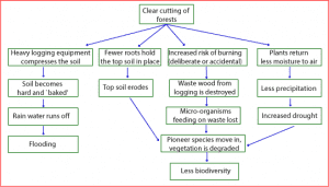 consequences of deforestation 300x171 - A Difficult Flow Chart - Sample Answer