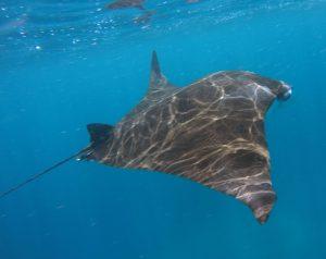 manta ray wwdtoy 300x238 - Describe a Memorable Holiday