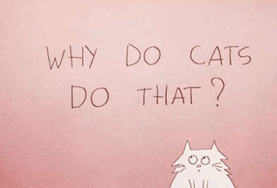 Why Do Cats Act So Weird?
