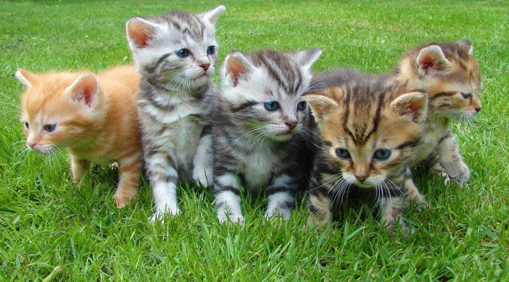 cute cats 1024x569 - IELTS is Unfair!