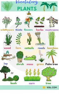 different types of plants [ielts vocabulary]